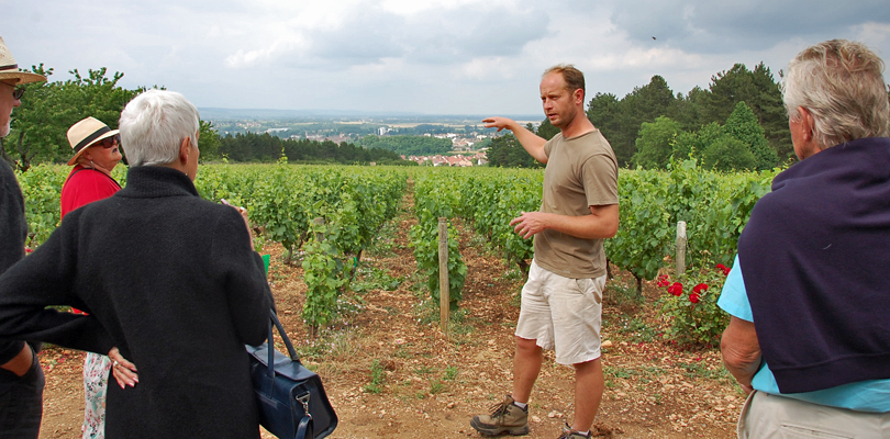 Magnolia tours to the Burgundy vineyards