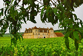 Clos de Vougeot vineyards in the heart of the Burgundy wine region