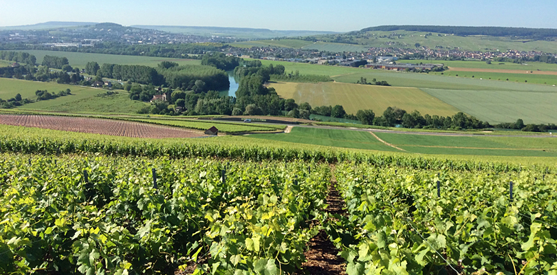 Champagne vineyards